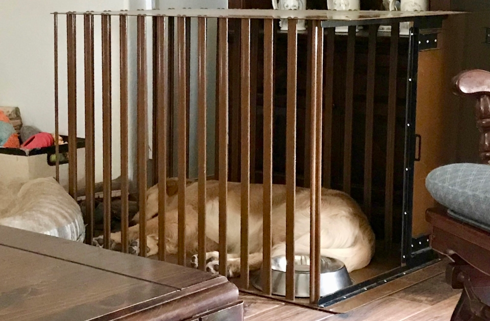 Amys dog sleeping in heavy duty dog crate from carrymydog.com