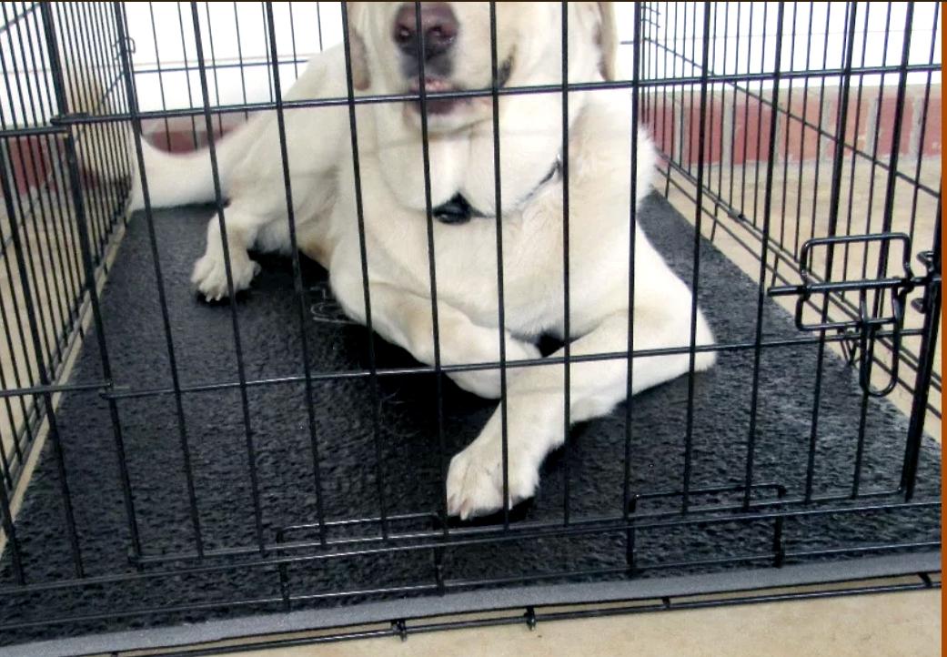 Tuff Comfort dog crate pads