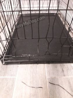 damaged crate from Arizona dixie-beagle mix