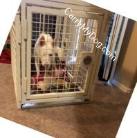 Eden_in_heavy-duty-dog-crate-from-carry-my-dog