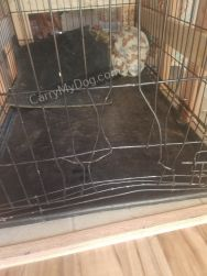 Billy dog from Arkansas previous wire crate