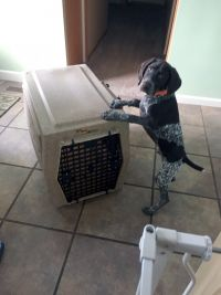 Levi and his new Ruff Tough Kennel from CarryMyDog.com