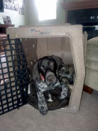 Levi and his new Ruff Tough Kennel from CarryMyDog.com-1