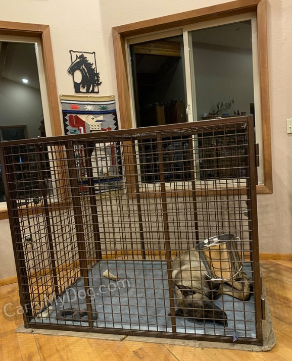 Rocko-K-in-his-new-Xtreme-heavy-duty-dog-crate-from-carrymydog.com