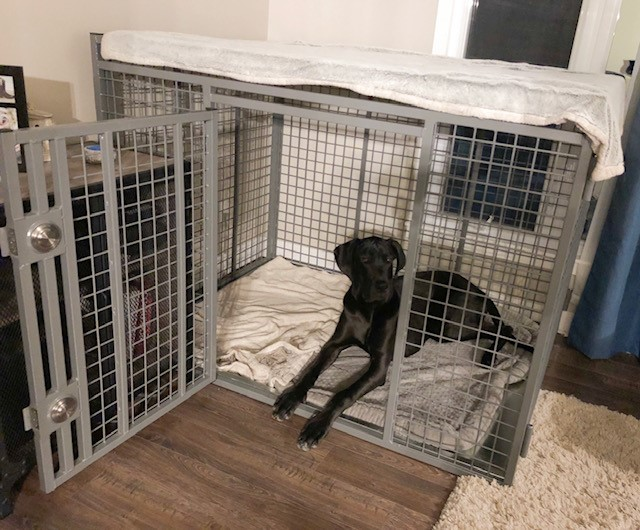 Sass-heavy-duty-dog-crate-by-Xtreme-from-carrymydog.com