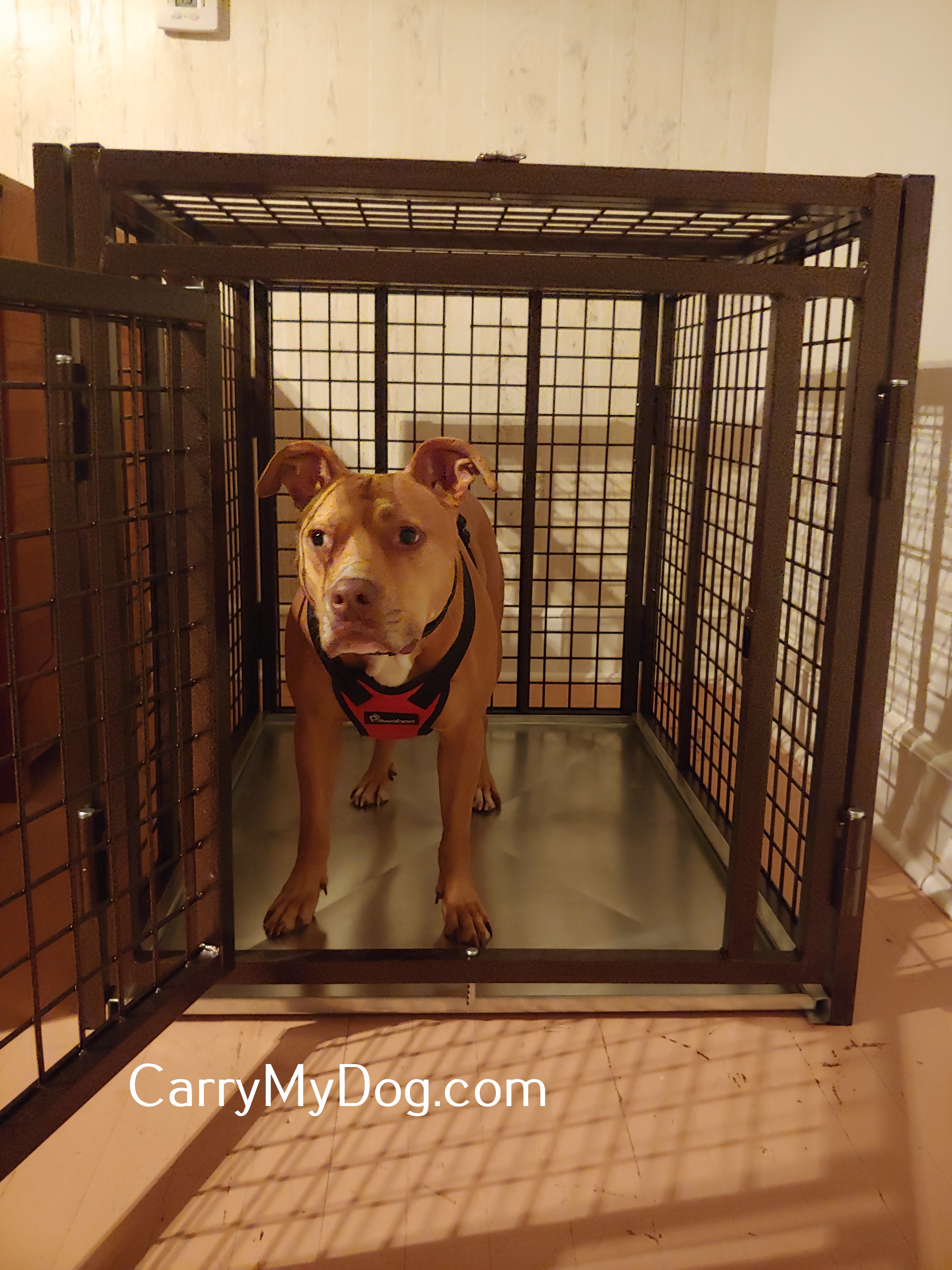 Stephanie_Dog_Xtreme_Heavy_duty_dog_crate_from_carrymydog.com