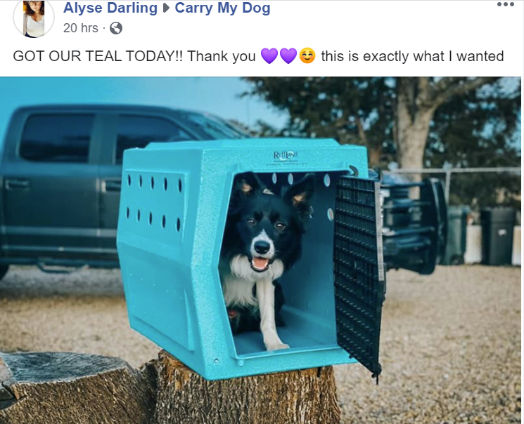 Alyse-Teal-Kennel