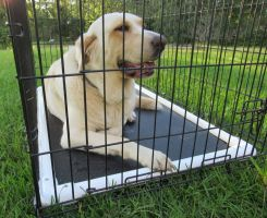 Heavy duty dog crate mat chew resistant by Tuff Comfort