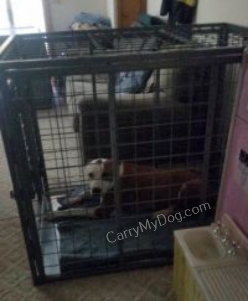 Xtreme-Dog-Crates-carrymydog.com-customer-bill-Mass-1