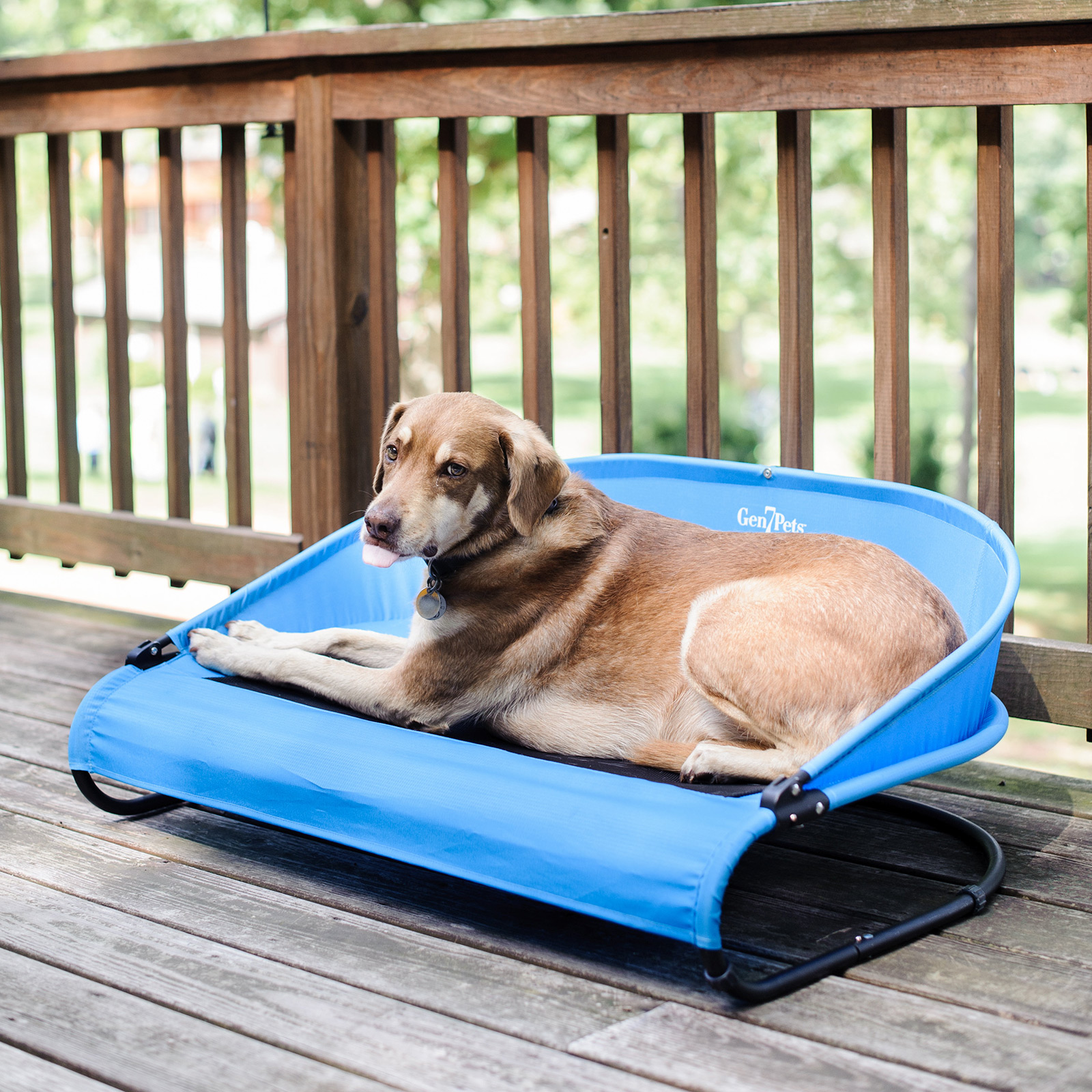 coolair dog cot an outside dog bed to use anywhere - the coolair dog cot an outside dog bed to use anywhere