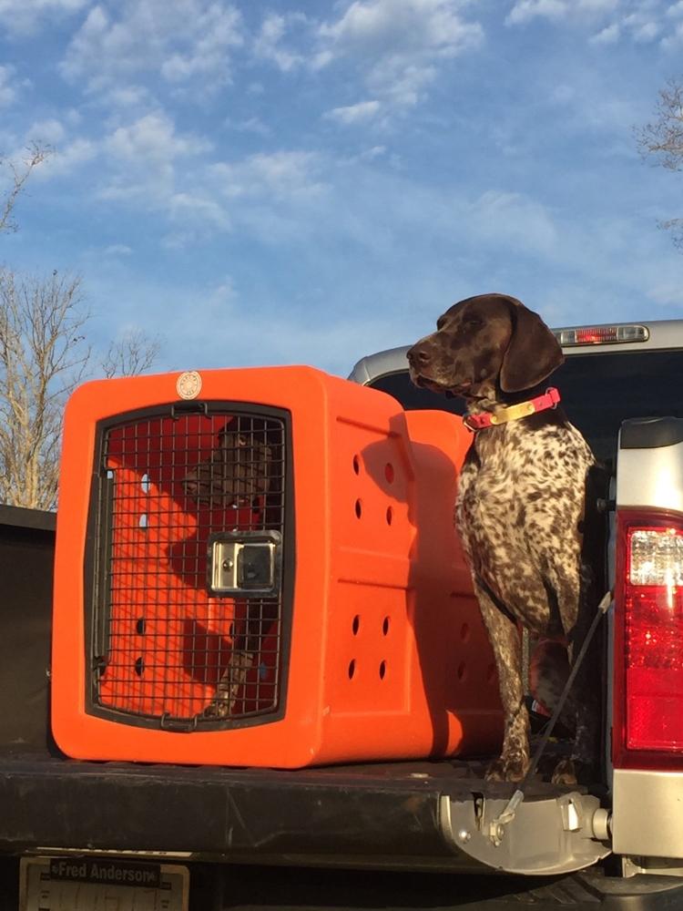 Dog Travel Crate >> Dakota 283 Dog Kennel D2-G3 FRM Superior Quality